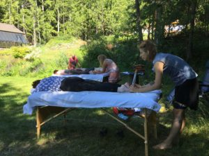 Acutonics 8 - Clinic Hours @ Kootenay Sound Healing Centre | Riondel | British Columbia | Canada